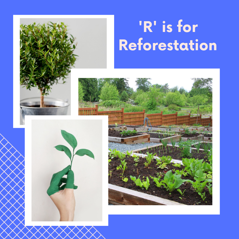 R is for Reforestation